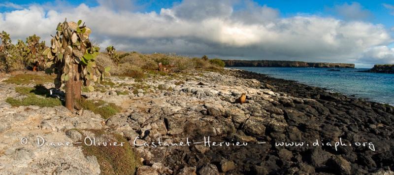 paysage de l'ïle de Nord Seimour - ïles Galapagos