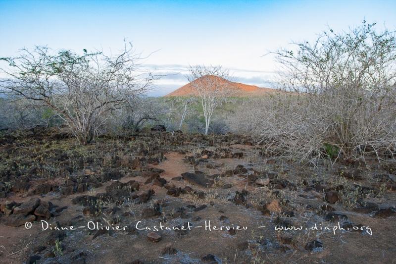 Paysage des Galapagos, île de Floreana