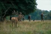 Le cerf et les photographes
