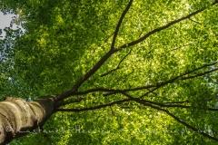Sous bois au printemps