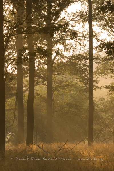 Lever de soleil dans un sous bois.
