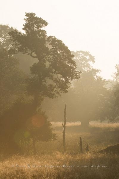 Prairie dans la brume au lever du jour