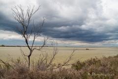 digue à la mer - 15 avril 2012