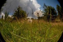 Au raz du sol, paysages d'Auvergne