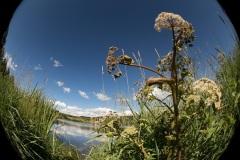 Au raz du sol, paysages de Haute Ardèche
