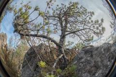 Paysage du causse au fisheye