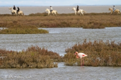 Pascale-Hervieu-2016-Flamants roses-5097