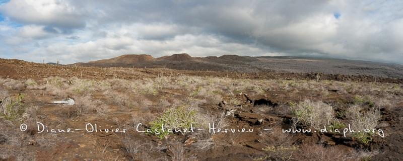 Paysage ïle Isabela, Punta Elbermarle - ïles Galapagos