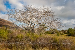 Paysage des Galapagos, île de  Santiago