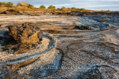 Paysage de l'Estran, ïle santiago - ïles Galapagos