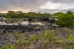 Paysage de l'Estran, ïle Isabela - ïles Galapagos