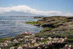 Paysage de l'Estran, ïle Fernandina, - ïles Galapagos