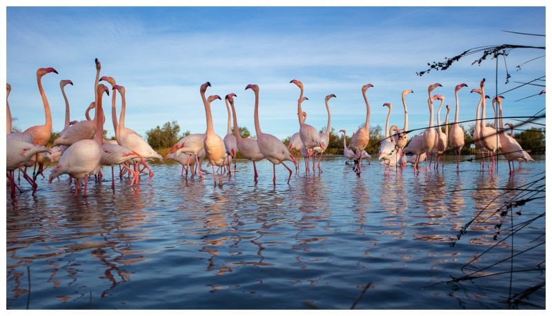 Groupe de flamants roses