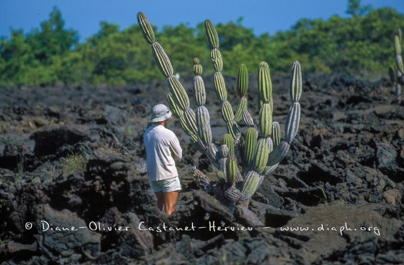 Cactus candélabre et touriste des Galapagos